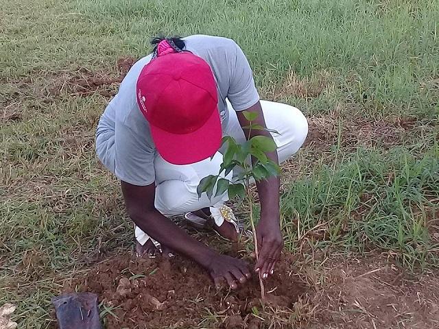 Conmemoran en Mayabeque Día del Trabajador Forestal (+ Audio y Fotos)