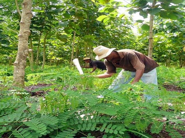 Felicitación a los trabajadores forestales