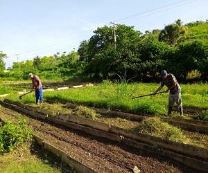 Avanza en Bejucal producción sostenible de alimentos.