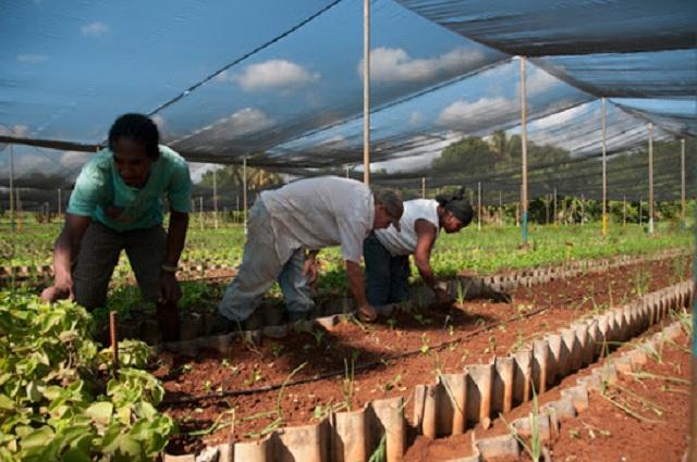 Priorizan apoyo a tareas agrícolas (+Audio)
