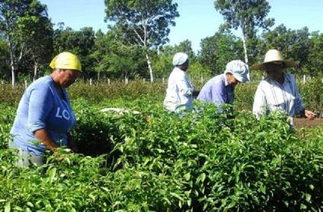 El incremento de la producción de alimentos resultado de la combinación de la ciencia y la agricultura.
