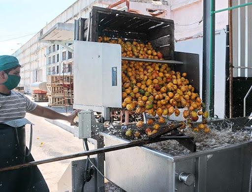 Sustituyen importaciones y garantizan soberanía alimentaria en fábrica de conservas de Mayabeque.