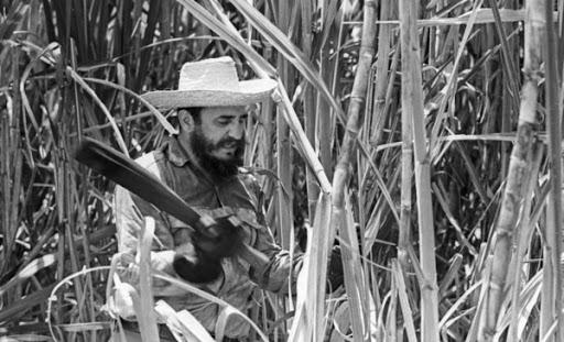 Fidel y la zafra azucarera.