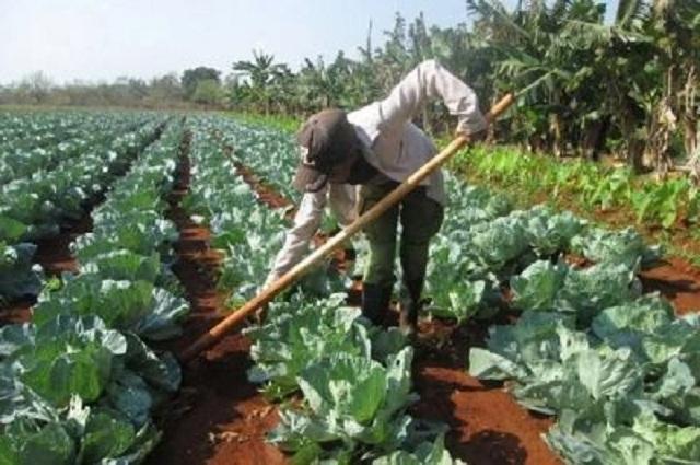 Los centros de este tipo en Mayabeque tienen entre sus prioridades el desarrollo de los cultivos de ciclo corto.
