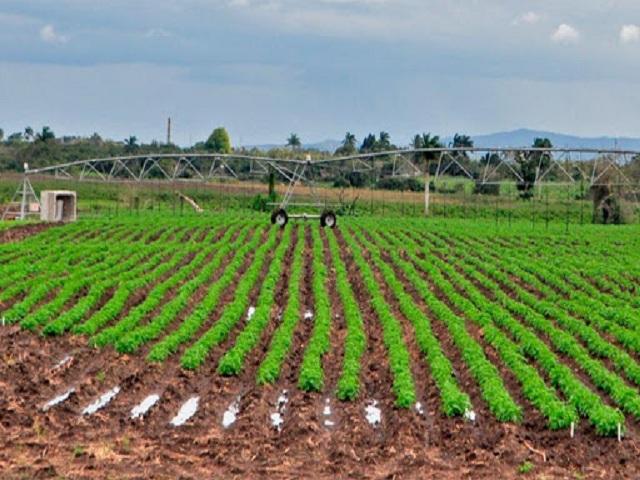 Estrategias para producir alimentos para el pueblo.