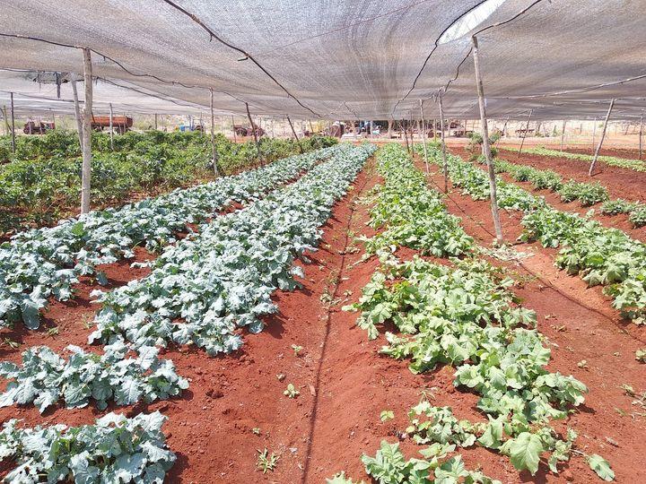 Su misión es facilitar una producción sostenible de alimentos.