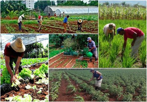 Producción de alimentos.