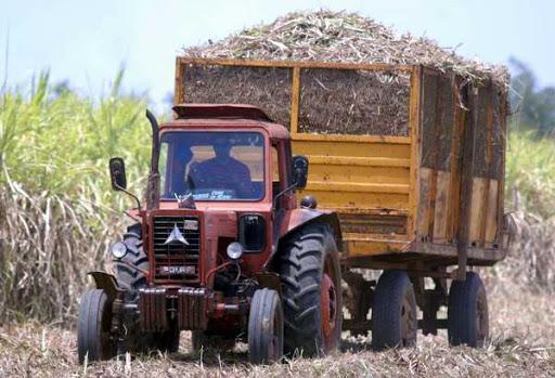 Alistan condiciones para zafra azucarera en Mayabeque (+ Audio)
