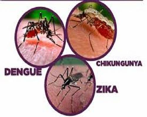 Las arbovirosis: enfermedades prevenibles