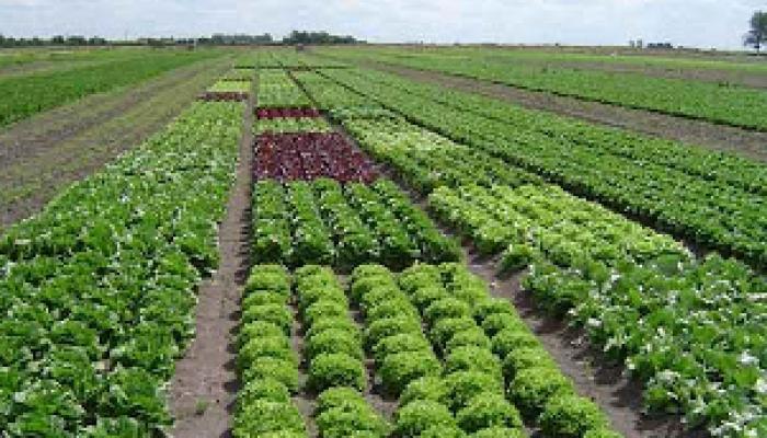 Agricultores de Mayabeque potencian producción de alimentos para la capital cubana.