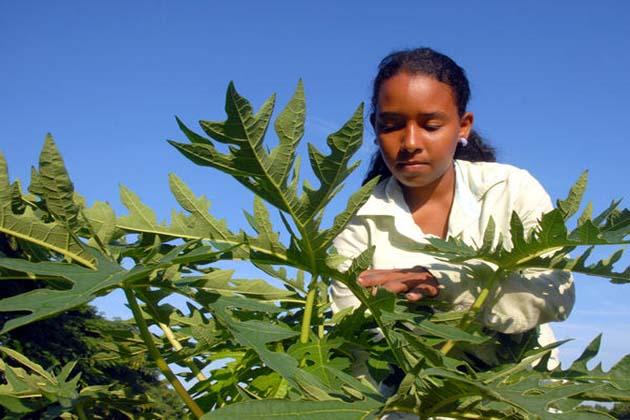 Mujer rural cubana Foto: De archivo