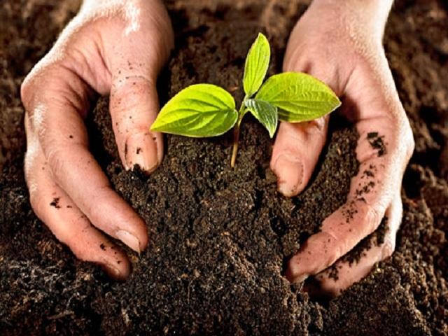 Agricultores y científicos de Güines trabajan de conjunto para incrementar rendimientos productivos.
