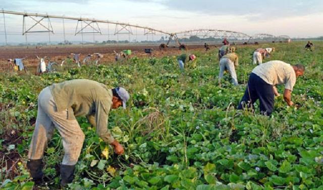El objetivo es cosechar el mayor por ciento de las producciones que se encuentran en el campo.