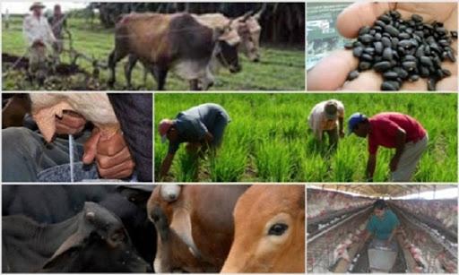 Trabajadores agropecuarios asumen nuevos retos (+ Audio)