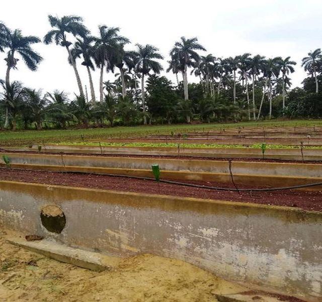 Grupo Nacional de la Agricultura Urbana, Suburbana y Familiar recorre Mayabeque.