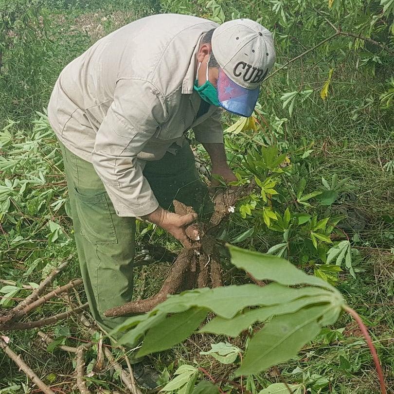 Incrementan producciones agrícolas en Mayabeque gracias a la agroecología.