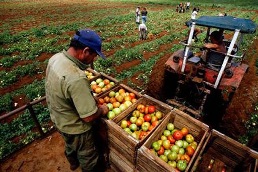 Chequea contratación de cultivos Asociación Nacional de Agricultores Pequeños de Batabanó (+ Audio)