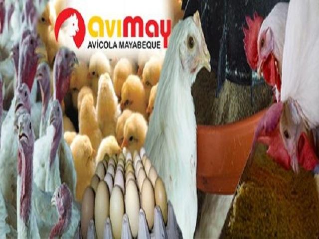 Reciben bandera Proeza Laboral trabajadores de la Empresa Avícola Mayabeque.
