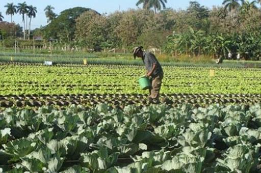 Agricultura en Mayabeque.