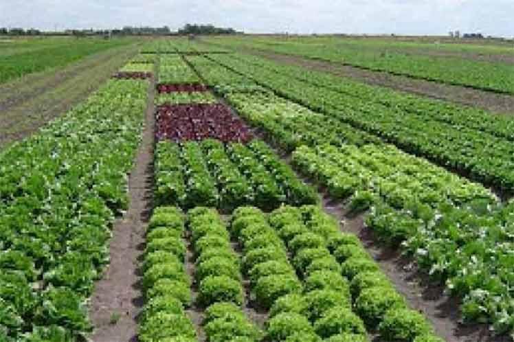 Agricultura en Cuba requiere inversiones millonarias hasta 2030