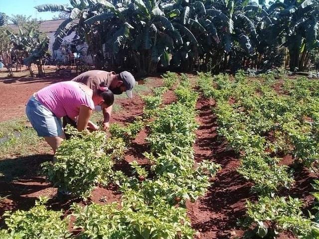 En una pequeña porción de tierra logran variados cultivos.