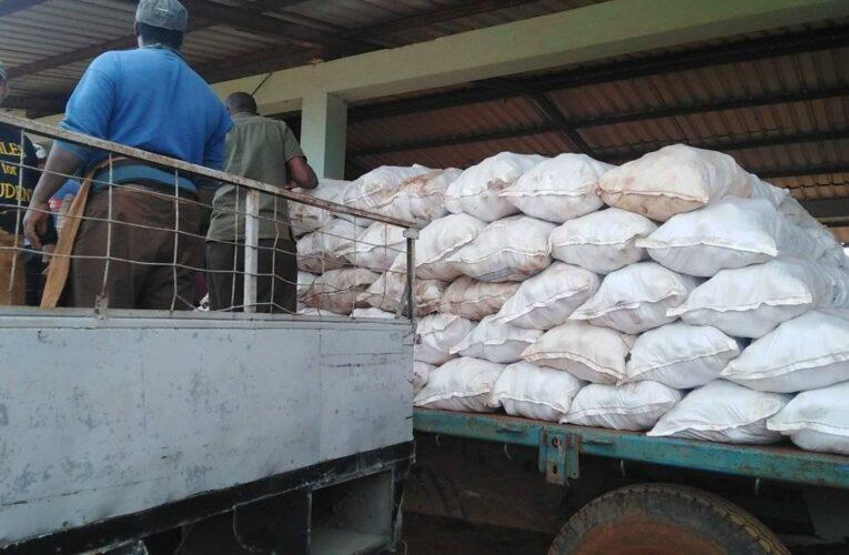 Batabanó: producción de alimentos en función de las prioridades del país (+Audio y Galería)