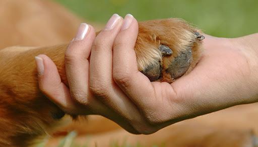 La disposición establece las obligaciones con la protección y cuidado de los animales. Foto: Cubadebate