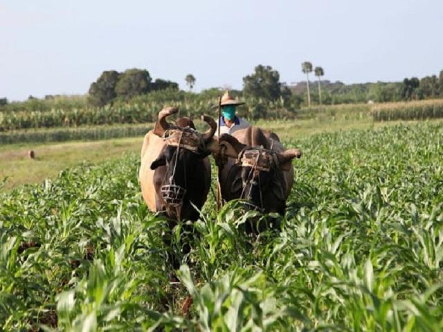 Campesinos celebran primero de mayo sobre los surcos.