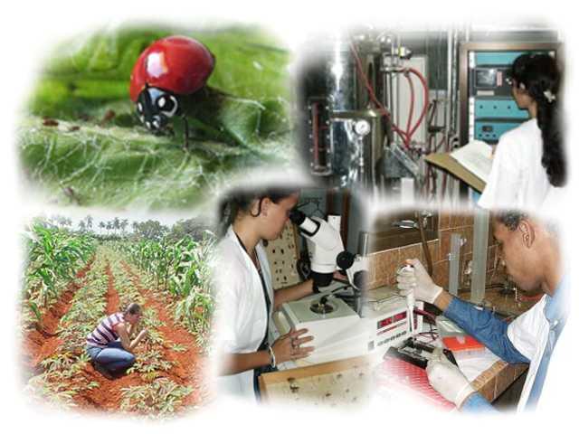 Investigadores de Mayabeque preservan la salud vegetal en Cuba.