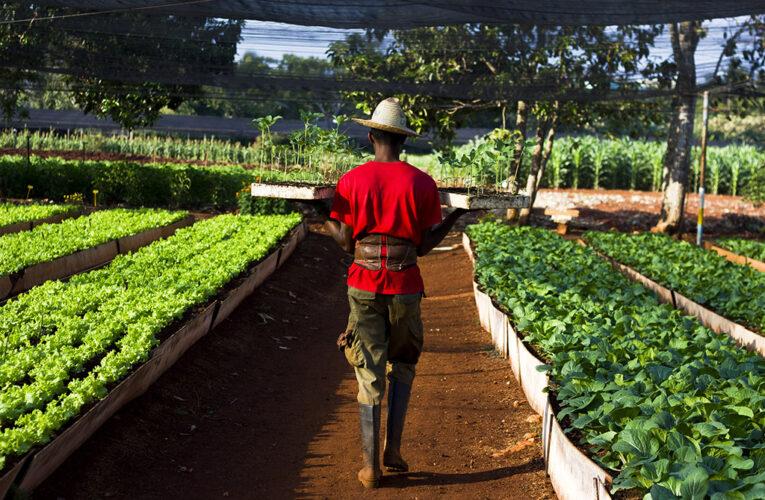 Fortalecen sostenibilidad alimentaria en centros educativos de San Nicolás (+ Audio)
