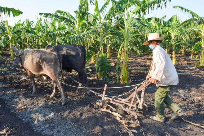 A favor del desarrollo agrícola y el bienestar de los productores  (+ Audio)