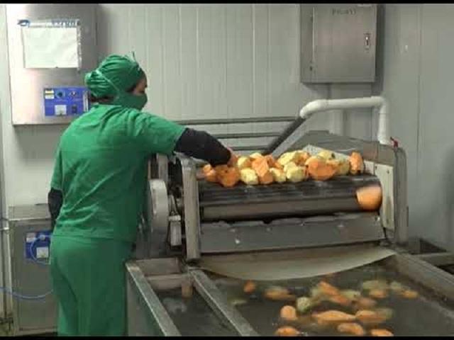 Planta procesadora de vegetales expande mercado en fronteras en Mayabeque.