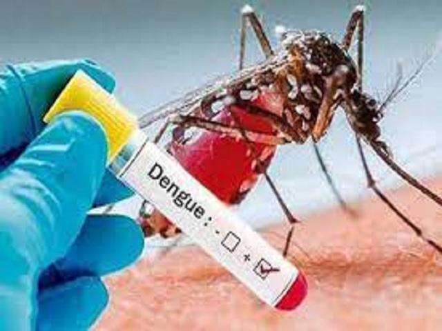 Eliminar el Aedes Aegypti es evitar el dengue.