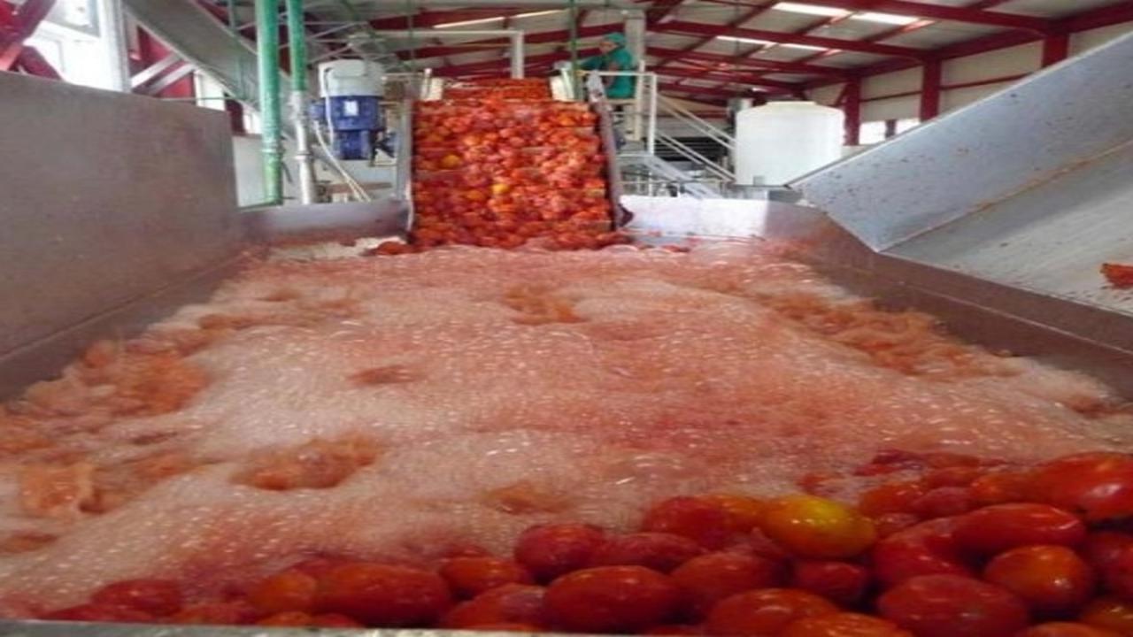Contribuyen a la alimentación del pueblo en fábrica de conservas de Batabanó.