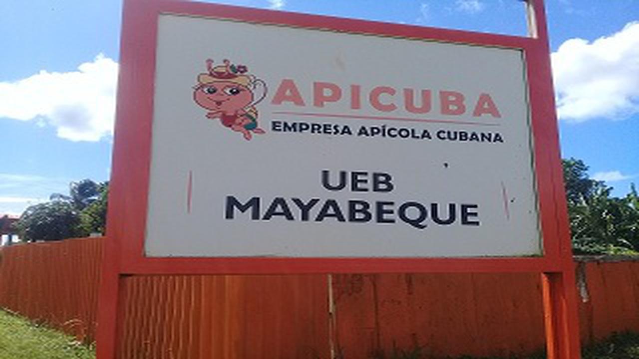 Pretenden superar record productivo en Empresa Apícola de Mayabeque.