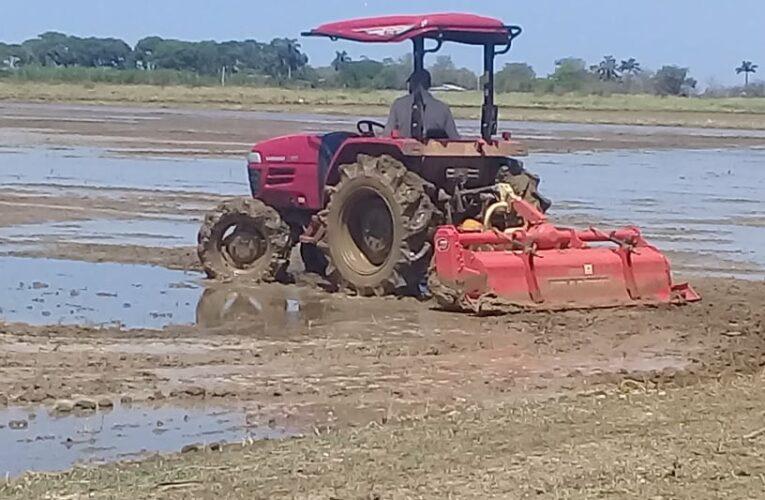 Introducen nueva tecnología para la siembra de arroz en Mayabeque(+Audio)