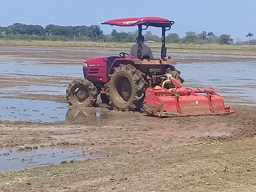 Introducen nueva tecnología para la siembra de arroz en Mayabeque.