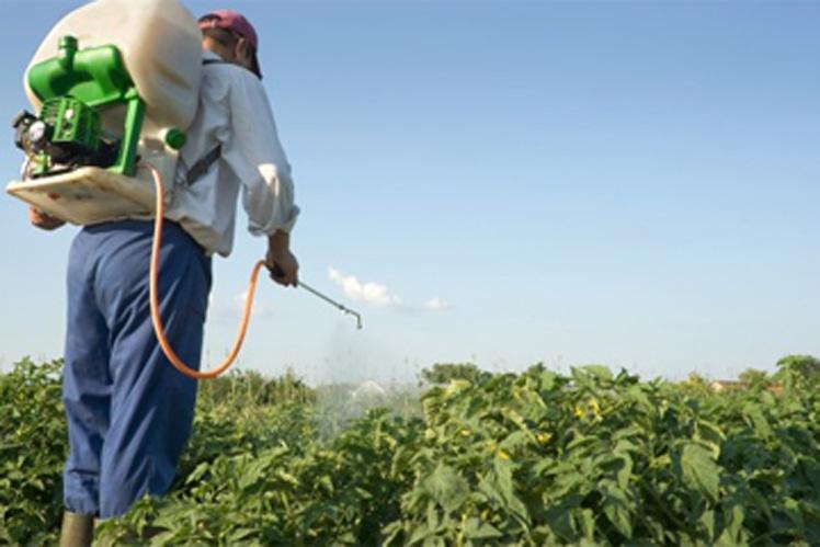 Los jóvenes y la agricultura (+ Audio)