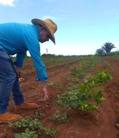 Cultivo de garbanzos ya da sus primeros resultados.