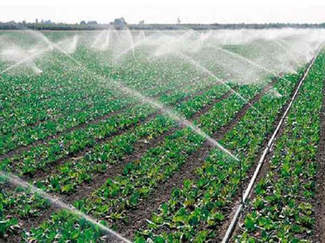 Exhortan en Madruga a explotar potencialidades agropecuarias (+Audio)
