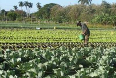 Melena del Sur tercer lugar en Agricultura Urbana Suburbana y Familiar (+ Audio)