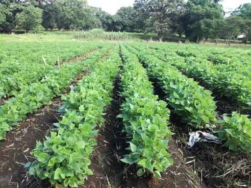 Avanza proyecto de soberanía alimentaria en Mayabeque (+ Audio)