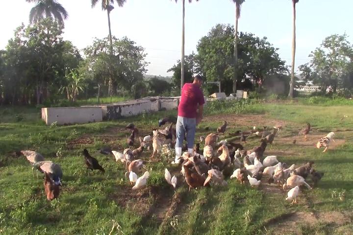 Cooperativistas de Mayabeque contribuyen a la sustitución de importaciones.