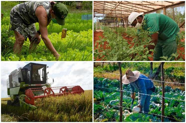 Agricultura de Mayabeque por más producción de alimentos