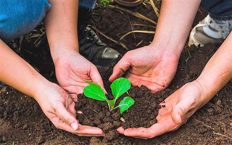 Los árboles producen oxígeno y son esenciales para la naturaleza