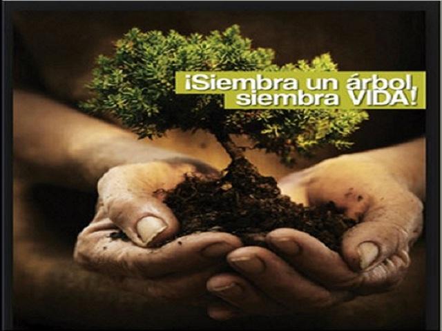 Los árboles son el pulmón del planeta.