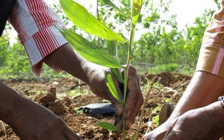 Reconoce presidente de Cuba labor de trabajadores forestales