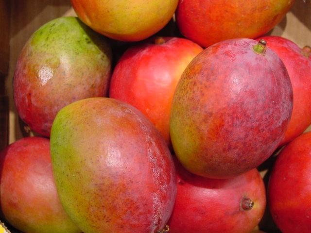 Incrementan producción de frutales en Madruga (+ Audio)