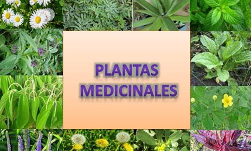 Impulsa Agricultura Urbana, Suburbana y Familiar  producción de plantas medicinales