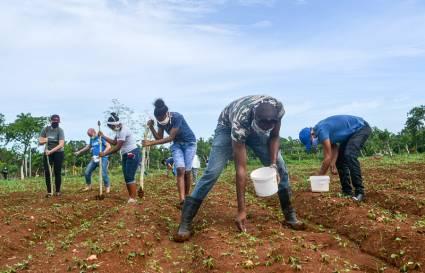 Apoyan labores agrícolas jóvenes de Mayabeque  (+ Audio)